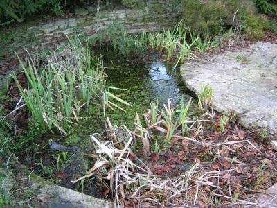Pond clean before