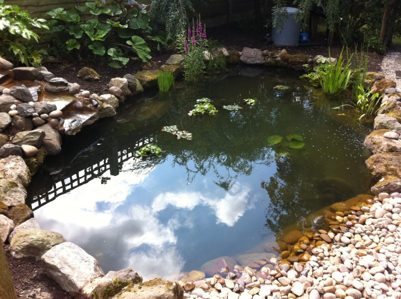 New Pond And Waterfall Build Projects