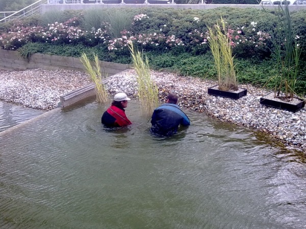 Pond planting