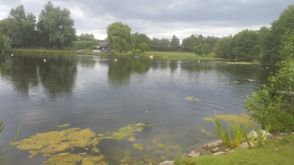 Pond problems